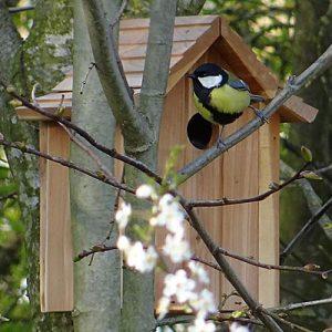 NIDI WILD BIRDS - BIRDGARDEN.IT
