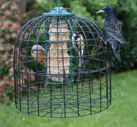 protezione alimenti da uccelli indesiderati di grossa taglia