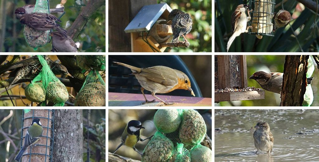 uccelli selvatici, birdgarden, birdgardening, birdfeeding, bird garden