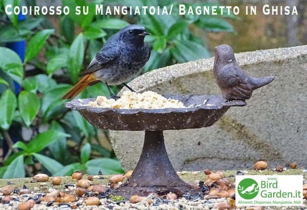 bagnetto mangiatoia ghisa 146 - www.birdgarden.it